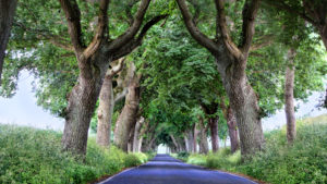 Insel Rügen, Allee, romantische Straße mit Bäumen, dt. Alleenstraße
